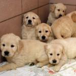 92 Hundewelpen von der Polizei gerettet