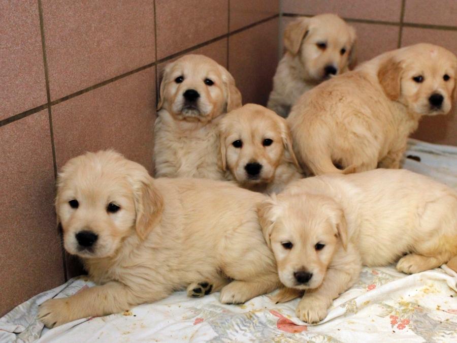 92 Hundewelpen Von Der Polizei Gerettet Gute Nachrichten