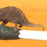 Das kleinste Reptil der Welt gefunden