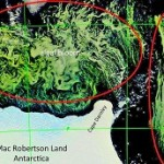 Ein gigantischer Fund: Forscher entdecken riesige Algenblüte