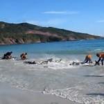Gestrandete Delfine durch Urlauber gerettet