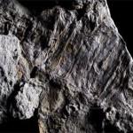 Erdgeschichtliche Lücke durch Fossilienfund gefüllt