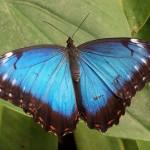 Schmetterling liefert Vorbild für Infrarotsender