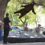 Das Wetter dreht sich: Ein Bär fliegt tief