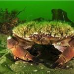 Tiere passen sich den Offshore-Windparks an
