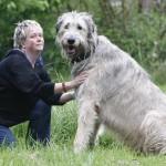 Irischer Wolfshund aus Unna ist wahrscheinlich größter Hund der Welt