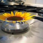 Biogasanlagen erzeugen über drei Prozent des Strombedarfs in Deutschland