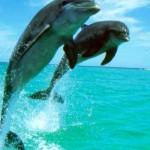 Schweizer Importverbot für Delphine und Wale