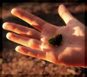 Hand aufs Herz, Herz in Hand, Sprache des Herzens, Kurze Lektuere, Sprache ohne Worte  Paulo Coelho