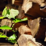 Ulm erzeugt sauberes Gas aus Holz