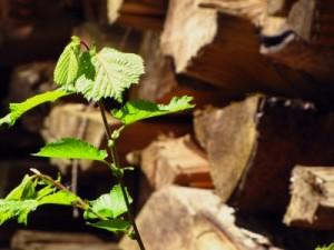Holz, nachwachsender Rohstoff, saubere Energie, Gas