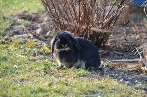 Kaninchen finden Granate, Kaninschen, buddeln nach Bombe