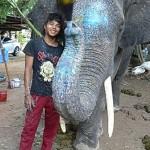 Wenn Tiere zu Künstlern werden