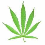 Cannabis verhindert Wachstum von Krebszellen