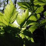 Panasonic entwickelt künstliches Fotosynthesesystem
