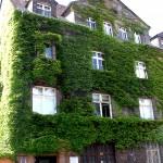 Saubere Stadtluft durch grüne Wände