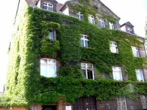 Gruene Hauswand, Efeu an Hauswand in Nuernberg