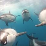 Grandiose Aufnahme von Delfinen an der Küste Kaliforniens