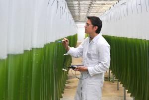 Biogas aus Algen