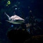 Pazifik - Hai rettet verschollenen Mann