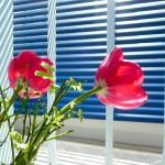 Sonnenschutz - es muss nicht immer ein Vorhang sein
