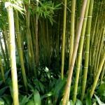 Fahrradrahmen aus Bambus und Hanf