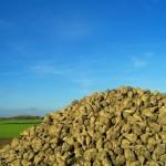 Biologisch abbaubare Stoffe – Zuckerrüben statt Plastik