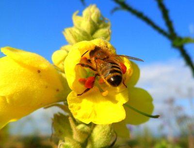 Biene bei der Arbeit, Biene, positive Nachrichten