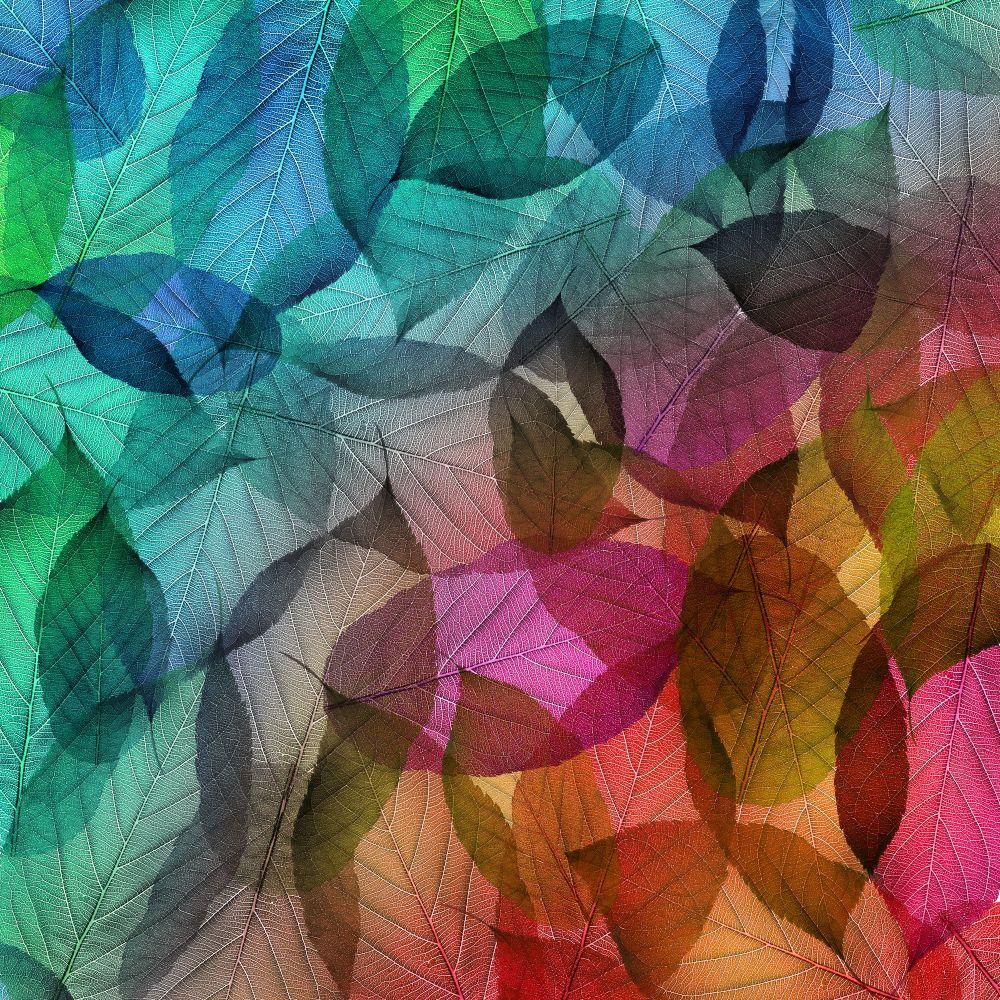 philosophie  ″30 Sekunden Lektüre: Veränderung und Erneuerung″ – Paulo Coelho Herbst bunte Blaetter