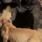 Erfolgreiche Rettung von 65 Hunden in den USA