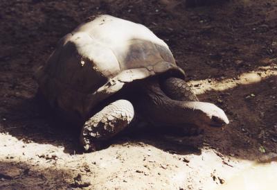 Riesenschildkröte, Galápagos-Inseln, lonesome george, positive nachrichten