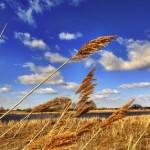 Biokohle als Schlüsseltechnologie bei erneuerbarer Energiegewinnung