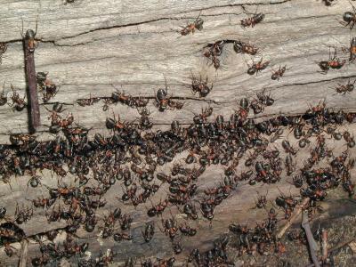 Ameisen-Demokratie, Ameisen, positive Nachrichten, wissenschaft