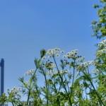 Der Weg zum CO2-freien Kraftwerk ist geebnet