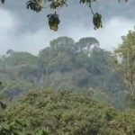 Klimaschutz in Äthiopien – Ein Wald, in dem wilder Kaffee wächst