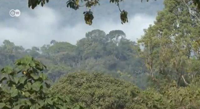 Kafa, Aethiopien, Klimaschutz, Umwelt, Kaffee, positive nachrichten