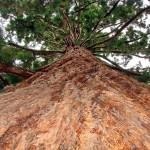 ″20 Sekunden Lektüre: Der riesige Baum″ – Paulo Coelho