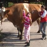 Tiergestützte Therapie mit Ringo dem Ochsen