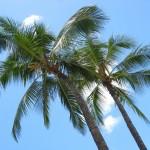 Einzigartige Möbel aus Kokos-Palmen und nachwachsendem Teakholz
