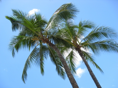 Palmen, Meobel aus Palmen, positive Nachrichten, tropenholz