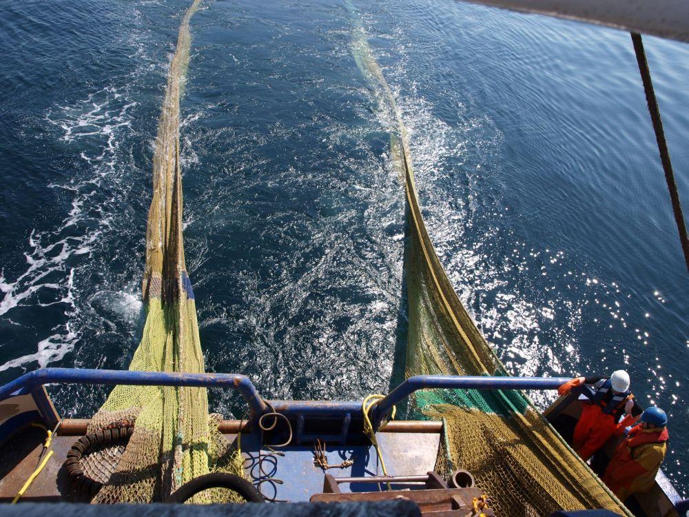 intelligente Fangnetze, positive nachrichten, fischfang