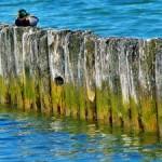 Erdgas durch Sonnenlicht und Algen