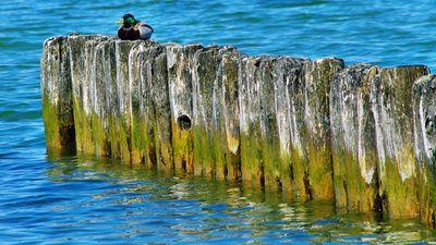 algen, erdgas, positive nachrichten