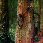 Natur-Kunst vom Feinsten: Baum nimmt sich verlorenes Fahrrad