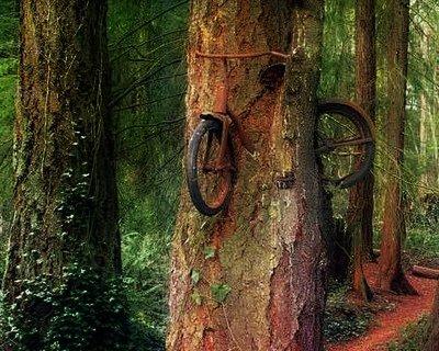 baumfahrrad, fahrrad steckt in baum, verlorenes fahrrad, positive nachrichten, natur, kunst