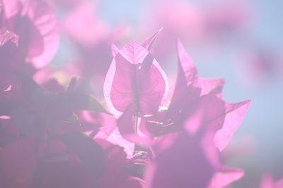 heilung, placebo-effekt, rosa blueten, positive nachrichten