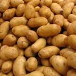 BASF stellt Anbau von Gentechnik-Kartoffeln in Europa ein