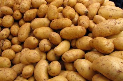 Kartoffeln, gentechnik-kartoffeln, positive nachrichten