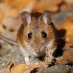 Beschlossene Sache – Aus für Kosmetik-Tierversuche tritt in Kraft
