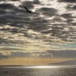 Erholung von Meerestieren - bereits kleine Schutzgebiete sind sinnvoll
